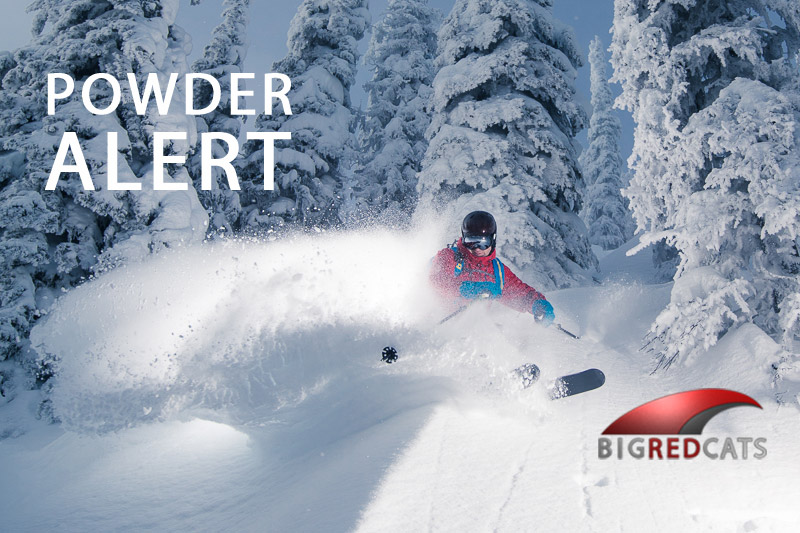 POWDER ALERT for Big Red Cats!